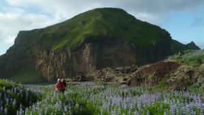 Westmannislands ostrovy