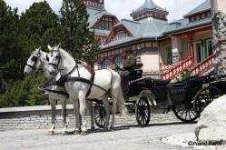 horseride summer