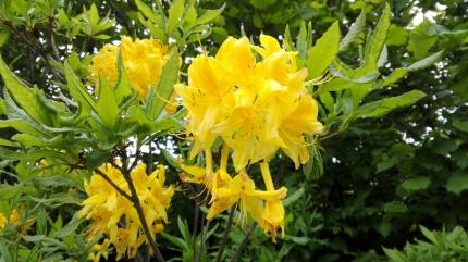 Miestna flora